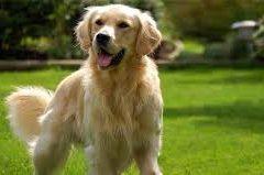 L'importanza di chiamarsi Toby ed essere un cane (accade a Messina)