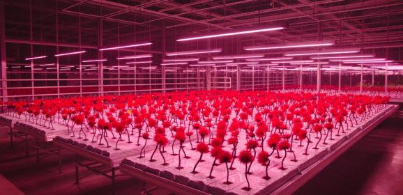 Il fiore rosso della felicità. 'Little Joe' di Jessica Hausner, Prix d'interprétation féminine Cannes 2019 a Emily Beecham